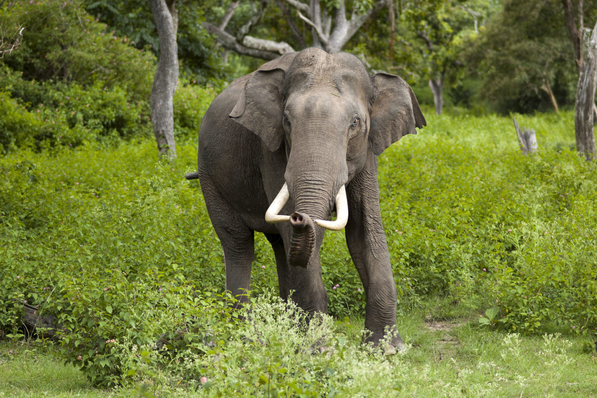 Elephant kerala wildlife