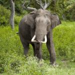 Wildest Wildlife tour of Kerala (10N/11D)