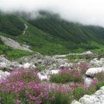 Trek to enchanting Valley of flowers in Uttrakhand (5N/6D)