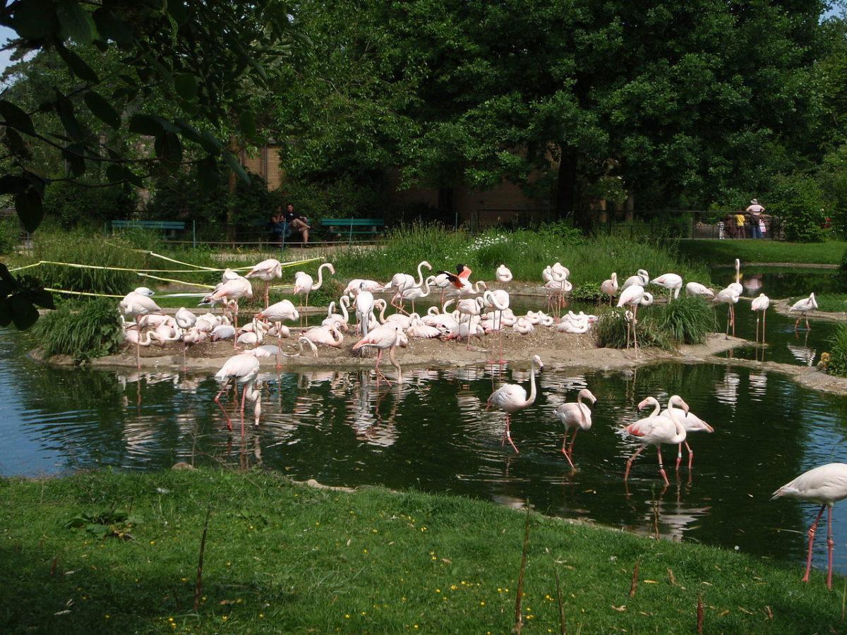 flamingos_breeding-gujarat